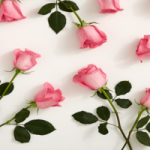 Tips To Grow Rose From Stem