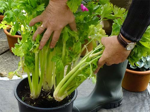 Vegetable Container Gardening For Beginners: Top Things To Consider