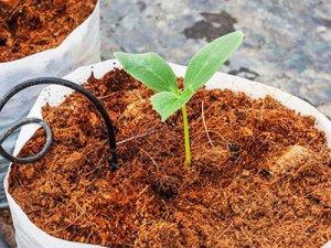 coco-coir-to-loosen-soil