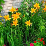 10 Tips To Prepare A Garden Bed For Flowers To Thrive