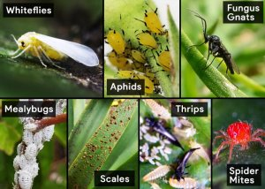 all-common-houseplant-bugs