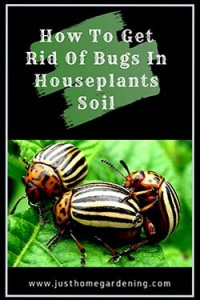 how-to-get-rid-of-bugs-in-houseplants-soil-article-image