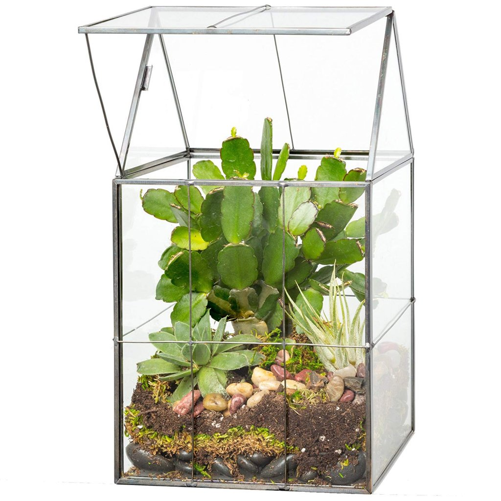 Where To Buy Terrarium Container Best Price Finds