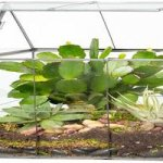 Where To Buy Terrarium Container: Best Price Finds