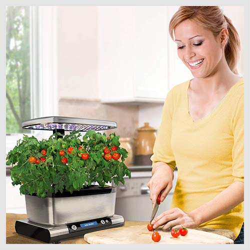 Best Grow Lights for Vegetables