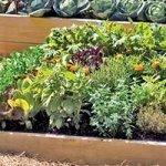 Top Raised Vegetable Garden Kit – Bad Back Shouldn't Ruin Your Home Garden
