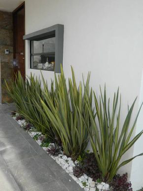 How To Care For A Yucca Plant: A Comprehensive Guide For Beginners