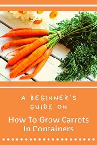 growing-carrots-in-containers-pin-image2-small