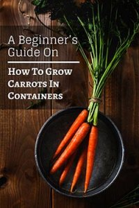 growing-carrots-in-containers-pin-image3-small