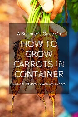 growing-carrots-in-containers-pin-image5-small
