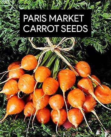 paris-market-round-carrots