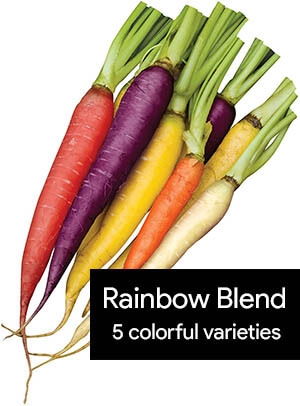 rainbow-blend-colorful-carrots