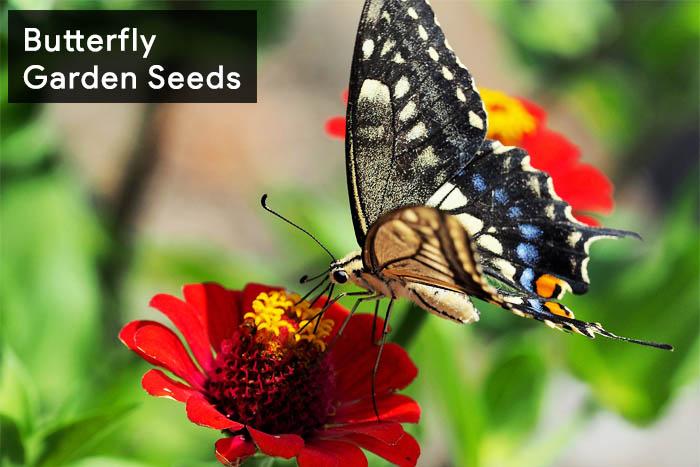 7-Butterfly Garden Seeds