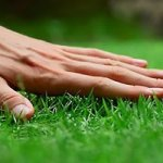 How to Grow Grass in Clay Soil and Create A Perfect Green Lawn