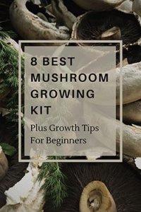 Best Edible Mushroom Growing Kit article image 2