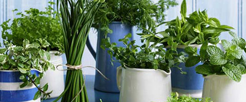 Tips On Picking Your First Organic Culinary Herb Seed Variety Pack
