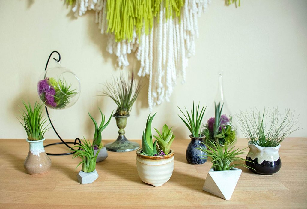 10 Miniature Plants For Terrarium Open And Closed Plus Practical Tips For Maintenance