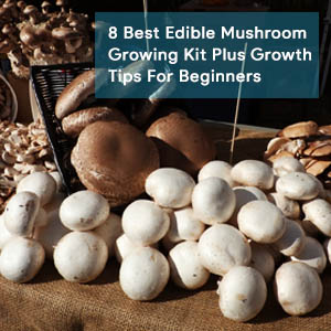 8 Best Edible Mushroom Growing Kit Plus Growth Tips For Beginners