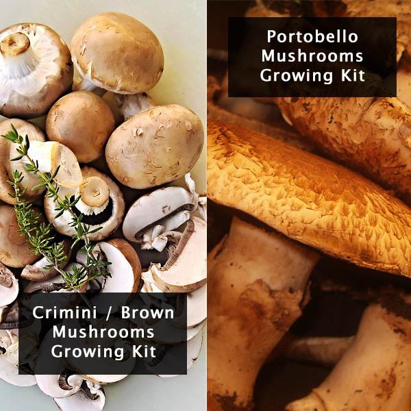 crimini-portobello-mushrooms-growing-kit