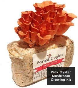 pink-oyester-mushrooms-grow-kit