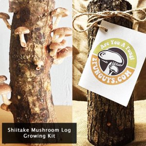 shiitake-mushroom-log-growing-kit