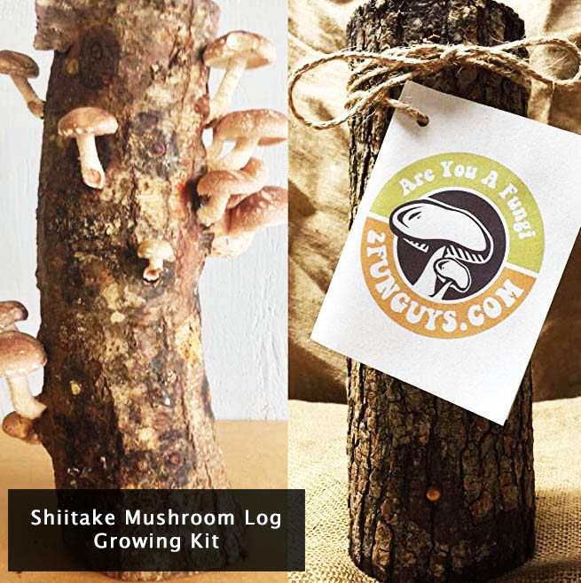 shiitake-mushroom-log-growing-kit