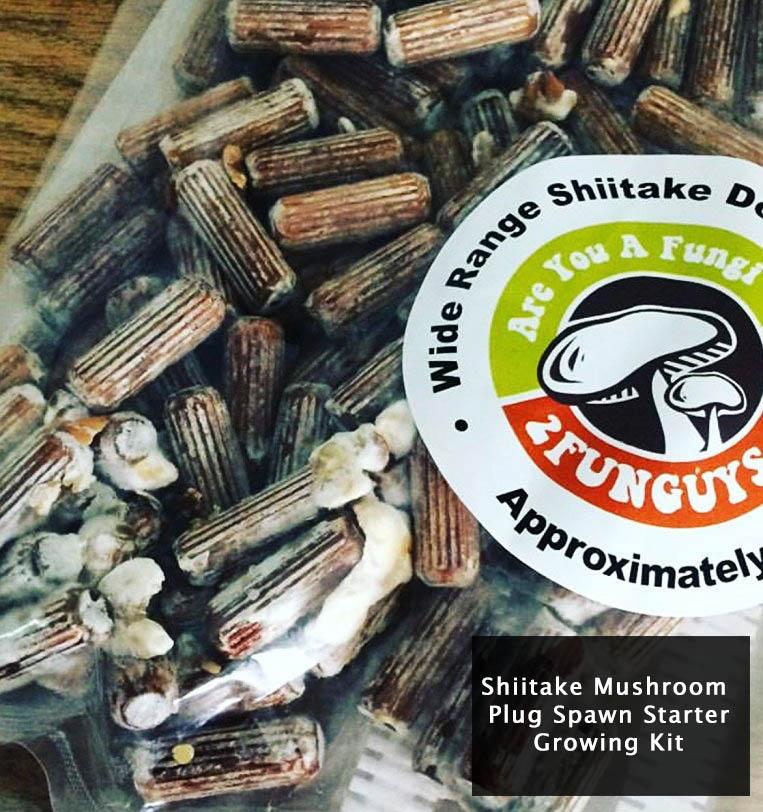 shiitake-mushroom-plug-spawn-starter-growing-kit