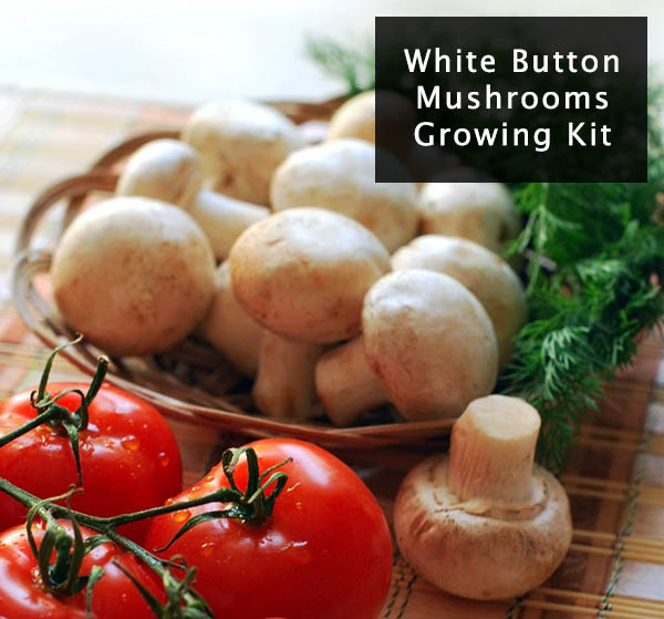 white-button-mushroom-with-tomatoes