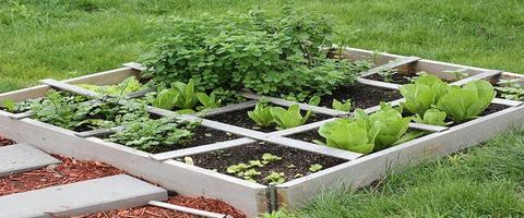 Beginner Gardening Tips on Where to Buy Grow Lights