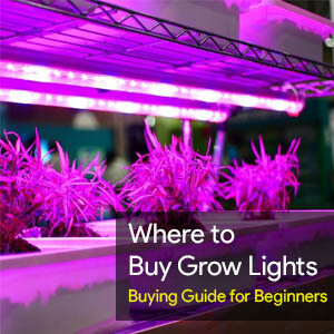 Where to Buy Grow Lights & Buying Guide for Beginners