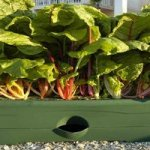 How to Find the Best Grow Box for Beginners: Urban Vegetable Gardening Tips