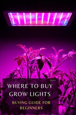 where-to-buy-growing-lights-minipin-image