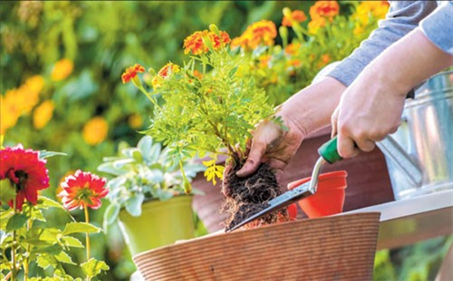 10 Winter Gardening Tips For Prolific Green Thumbs Just Home