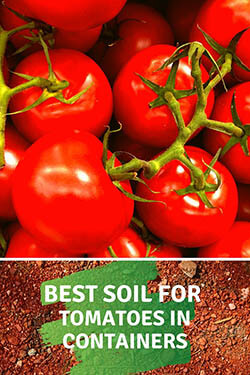 1-best-soil-for-tomatoes-in-pots-tomatoes-and-soil-ping-image-small