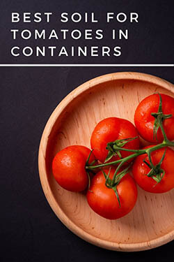 2-best-soil-for-growing-tomatoes-few-tomatoes-in-a-wooden-container-pin-image-small