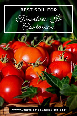 4-tomatoes-in-a-basket-pin-image-small