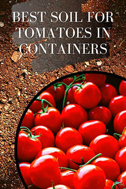 5-best soil mix for tomatoes-pin-image-small