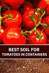 6-choosing-soil-for-tomatoes-in-containers-ripe-tomatoes-pin-image-small