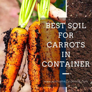 Best Soil for Carrots in Containers (Nutrients, pH Level, Drainage)