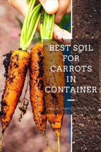 best-soil-for-carrots-in-container-minipin-image