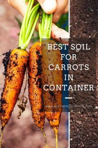 best-soil-for-carrots-in-container-pin-image