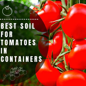 Best Soil for Tomatoes in Container (Potassium Rich)