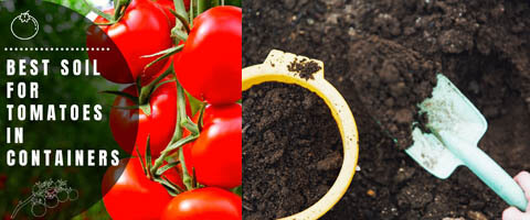 best-soil-for-tomatoes-in-container-featured-image