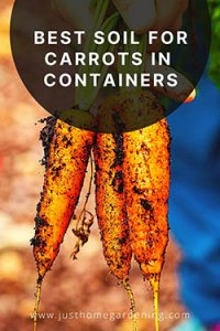 carrots-growns-in-containers-pulled-out-of-soil-by-a-man-pin-image3